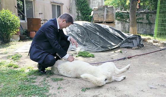 지난 5월 하루 연차를 내고 경남 양산 사저를 찾은 문재인 대통령이 반려견 마루를 쓰다듬고 있다. [중앙포토]