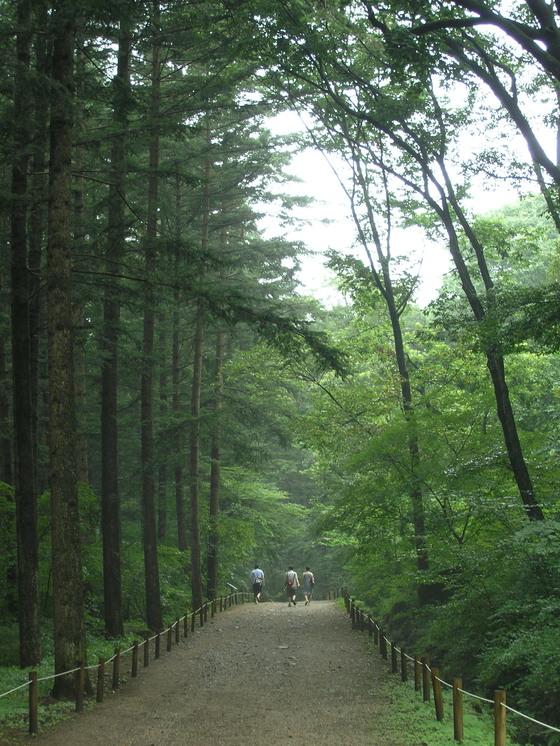 국립수목원 숲길.[사진 국립수목원]