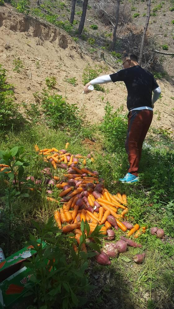 충북 옥천군은 지난 6월부터 야생 멧돼지가 자주 출몰하는 지역 3곳을 선정해 고구마와 당근 등 먹이를 주고 있다. [사진 옥천군]