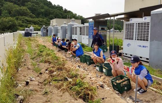충남대 기숙사 옥상에 조성된 텃밭에서 감자를 수확하고 있는 학생과 교직원들. [사진 충남대]