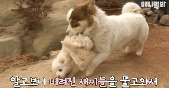 [사진 SBS 애니멀봐 유튜브 캡처]
