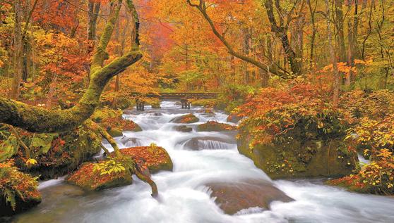 일본 아오모리는 계절에 따른 아름다운 변화를 오감으로 직접 느낄 수 있는 곳이다. 약 14㎞ 길이의 오이라세계류는 물줄기를 따라 크고 작은 폭포와 울창한 원생림이 조화를 이루고 있어 자연 그대로의 모습을 볼 수 있다. [사진 롯데관광]