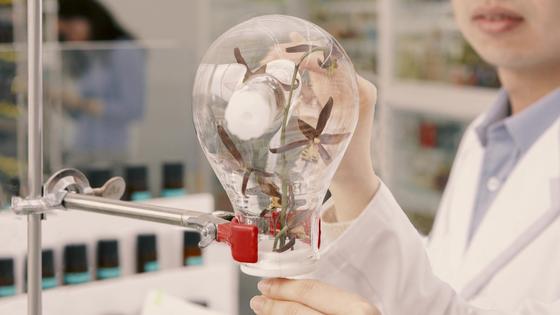 꽃에서 향을 추출해 분석하는 과정. 화학적 과정이 많아 기업에선 화학 관련 전공자를 선호한다. [사진 아모레퍼시픽]