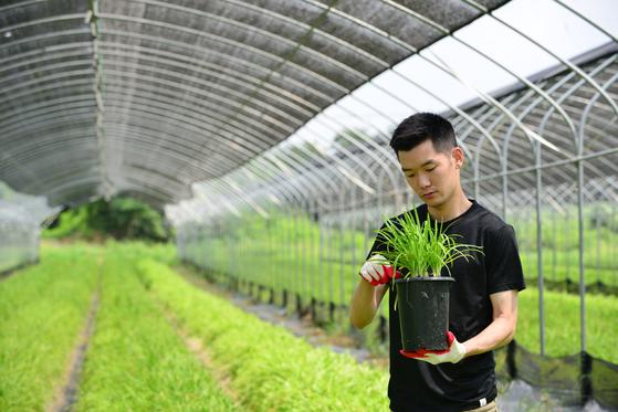 농장에서 삼채를 돌보고 있는 김선영씨. 그는 호주 유학 시절 우연히 삼채를 알게 된 후 한국으로 돌아와 청년 농사꾼이 됐다.