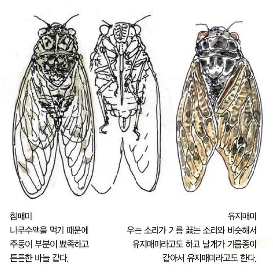 [소년중앙] 황경택 쌤과 자연이랑 놀자 6.매미