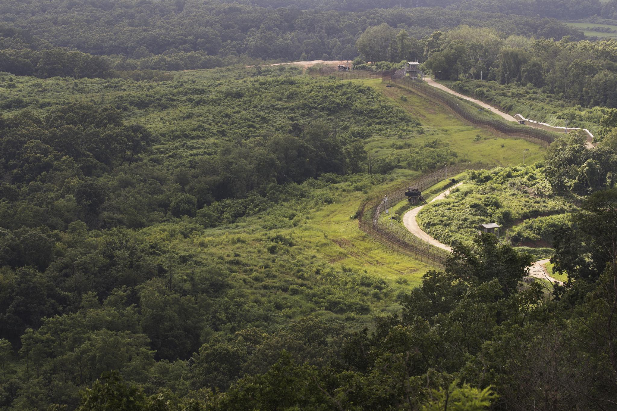 정전 65주년을 맞는 경기도 파주시 서부전선의 비무장지대(DMZ). 짙은 녹색 숲 사이로 남방한계선 철책이 보인다. [연합뉴스]