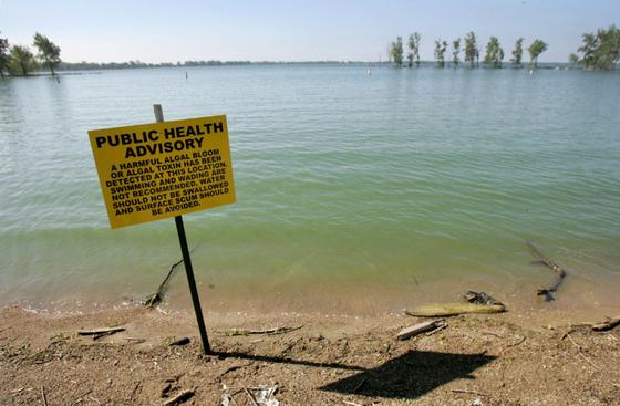2011년 5월 미국 오하이오주 세인트매리스 호수에 설치된 녹조 독소 경고판. 조류 독소가 검출됐으므로 수영이나 물을 삼키지 말라는 내용이다.