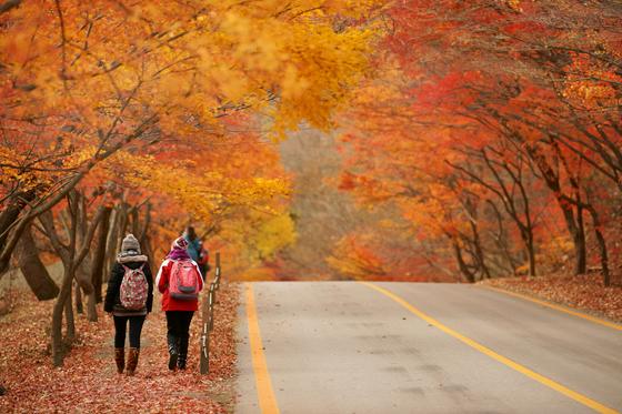 올해 가을 단풍은 이달 27일 설악산을 시작으로 내달 중순까지 천천히 남하할 것으로 예상된다. 평년 기온이 높아 예년 보다 다소 늦어질 것으로 보인다.[사진 코레일관광개발]