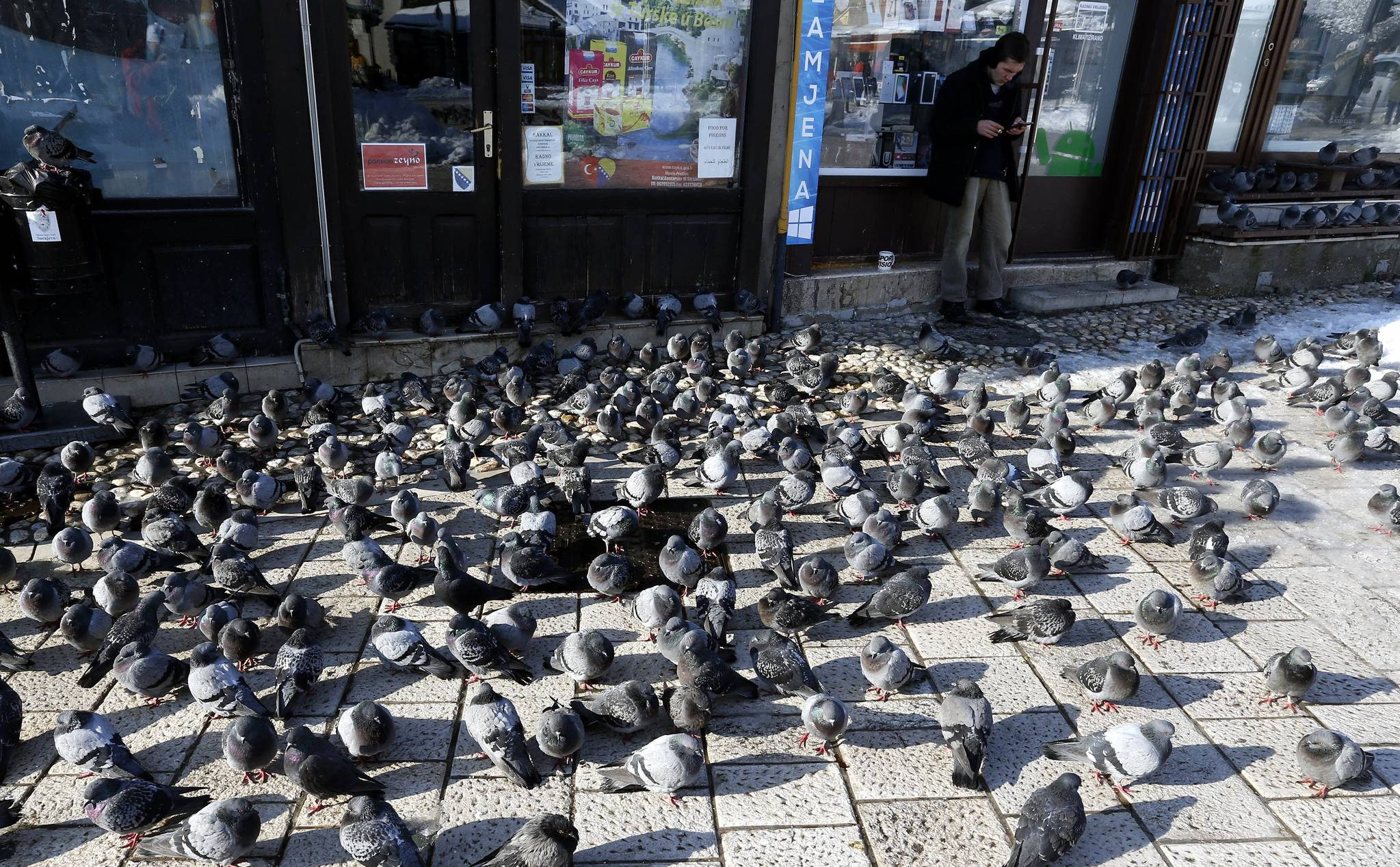 보스니아 헤르체고비나의 수도 사라예보의 비둘기 떼. 관광객들이 주는 먹이를 먹기 위해 몰려들었다.[EPA=연합뉴스]