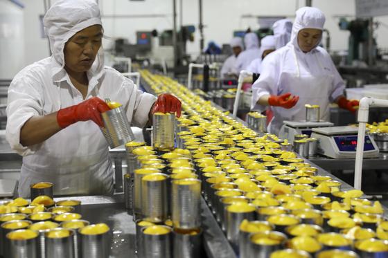 지난달 31일 중국 안후이성에 있는 한 식품 공장에서 일꾼들이 복숭아 통조림을 만들고 있다. 중국의 8월 대미 무역흑자는 사상 최고 규모인 311억 달러를 기록했다. [화이베이 AP=연합뉴스]