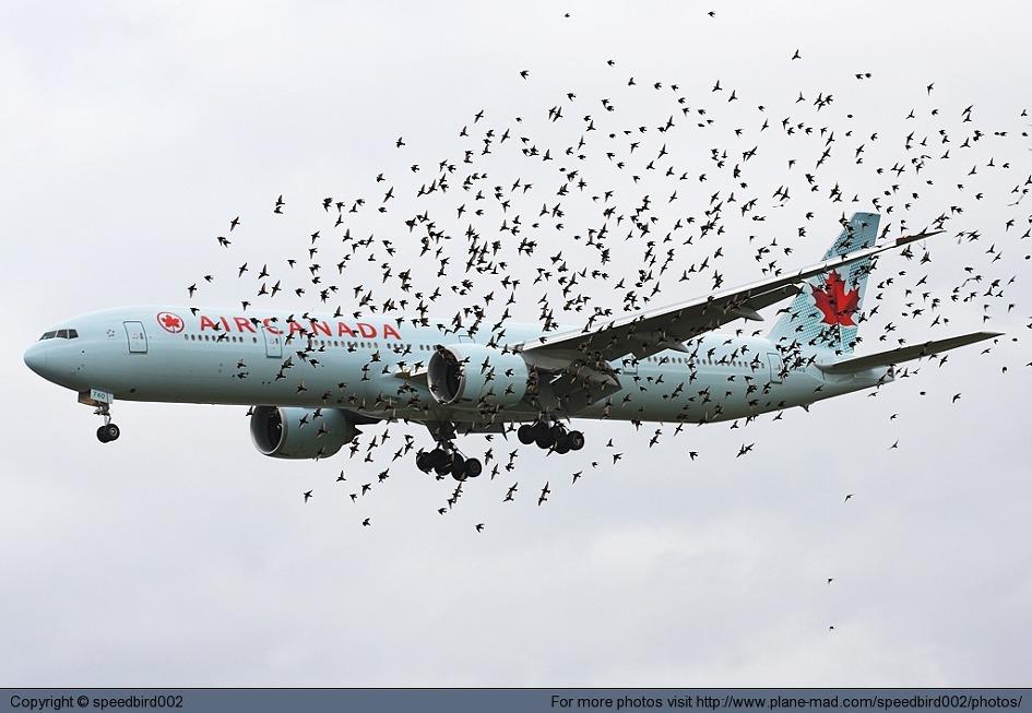 버드스트라이는 자칫 항공기 안전에 큰 위험을 가져올 수 있다. [중앙포토]