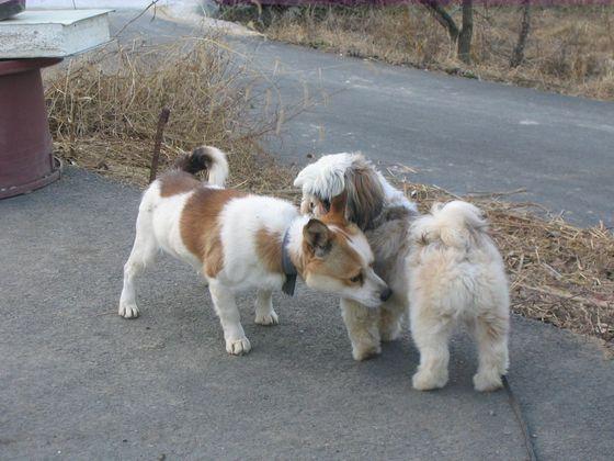냄새를 잘 맡는 동물을 대표하는 개는 일반적으로 사람보다 1만배 이상 냄새를 잘 맡는다고 한다. [중앙포토]