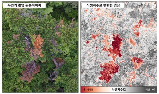 소백산 주목군락을 드론으로 촬영한 뒤 식생지수로 변환한 모습. [사진 국립공원관리공단]