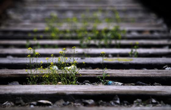 DMZ기획 경원선 신탄리역, 서울과 북한의 강원도 원산을 잇는 경원선은 절반도 채 달리지 못하고 경기도 연천군 신탄리역에서 멈춘다. 강원도 철원 민통선 안엔 철원역이 흔적으로만 남아있다.[중앙포토]