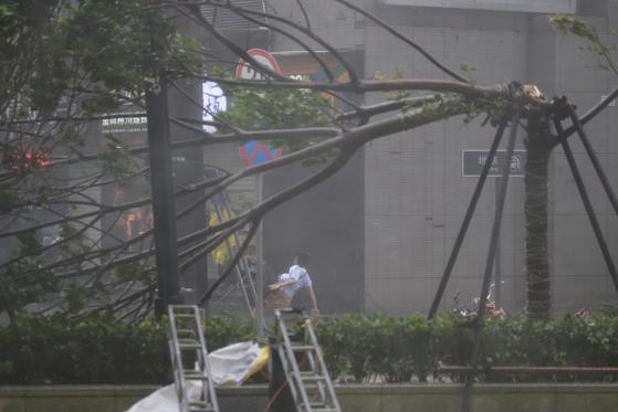 16일 태풍 망쿳의 영향으로 중국 선전시 도로의 한 나무가 부러져 있다. [로이터=연합뉴스]