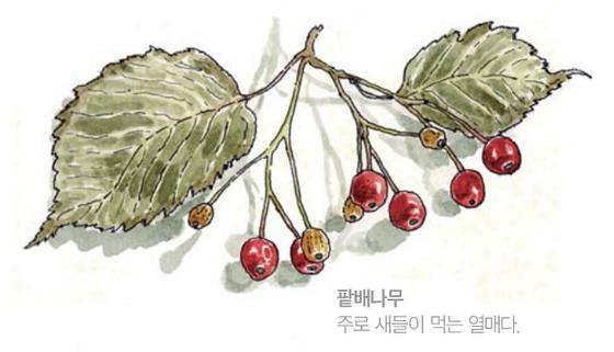 [소년중앙] 황경택 쌤과 자연이랑 놀자 7.열매