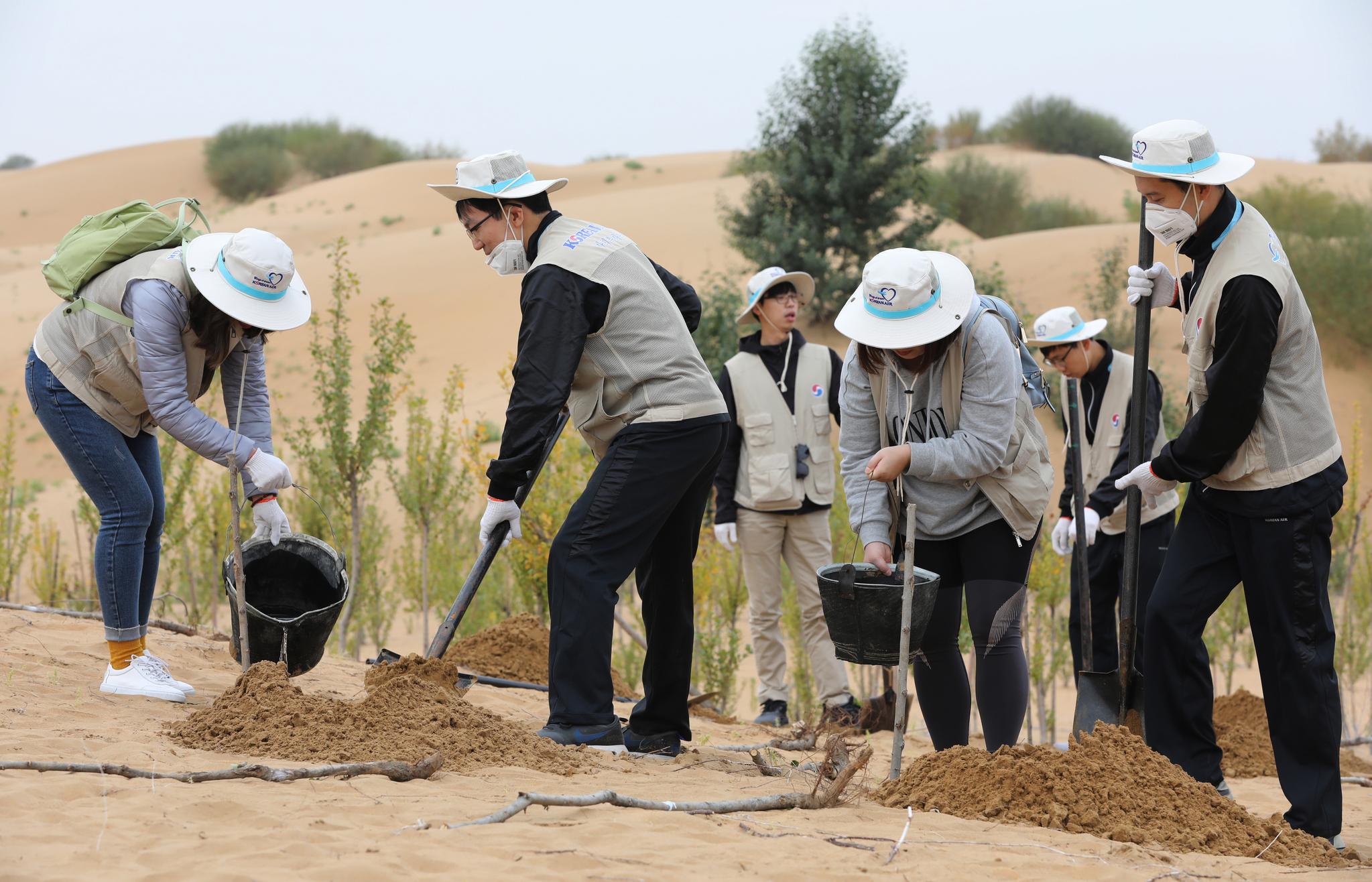대한항공은 19일까지 중국 네이멍구 쿠부치 사막에서 나무심기 봉사활동을 펼친다. 쿠부치=장진영 기자