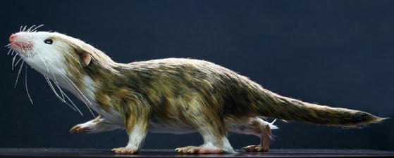 중국에서 화석이 발견된 포유류의 가장 작은 조상으로 알려진 '모르가누코돈'. 버밍햄대 등 국제연구진에 따르면, 포유류는 덩치가 작아지도록 진화하며 턱의 구조가 소형화ㆍ단순화했고 이것이 귀의 형성으로 이어졌다. [사진제공=Paleocreations.com]