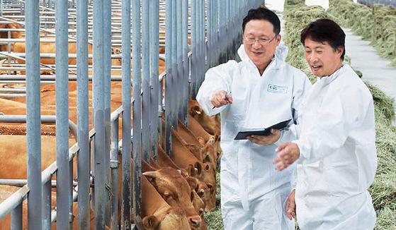 GS리테일은 협력사에 대한 맞춤형 지원 중 하나로 친환경 한우 사육을 위한 송아지 구매자금을 지원하 고 있다. 경북 안동시 민속한우에서 GS리테일 직원이 축사를 둘러보고 있다. [사진 GS그룹]