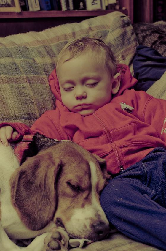 반려동물은 어린이의 정서발달과 인지능력에 긍정적인 영향을 주며, 자신감과 책임감이 증진된다. [사진 pixabay]