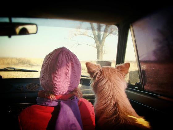 겁이 많고 말이 없는 내성적인 10살 여자 어린이가 10개월간 개와 함께 생활한 결과 또래 아이들과 관계가 형성되어 말수도 늘고 성격이 한층 밝아졌다. [사진 pixabay]