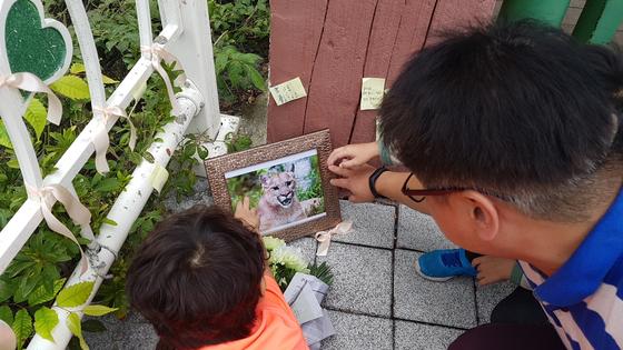 대전 오월드 앞에서 시민들이 퓨마를 추모하고 있다. 퓨마 뽀롱이를 추모하는 조화와 사진, 메모지가 놓여있다.프리랜서 김성태