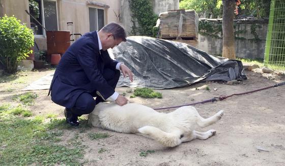 지난해 5월 21일 문재인 대통령이 양산 사저에 도착해 사저 마당에 있는 마루를 만지고 있다. [사진 청와대 제공]