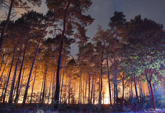 지난 8월 24일 독일 베를린 남쪽 클라우스도르프 지역에서 산불이 발생 숲이 불타고 있다. [AP=연합]