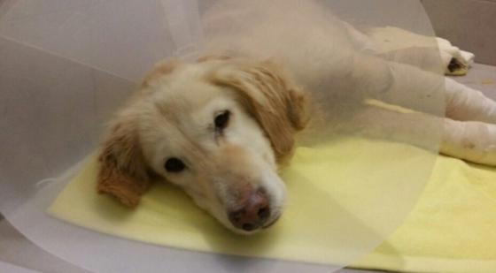 지난 2016년 1월 발견 당시 치치. 동물보호단체 '나비야사랑해' '해피앤딩레스큐'의 도움으로 치료와 사후 지원을 받을 수 있었다. [사진 나비야사랑해 ]