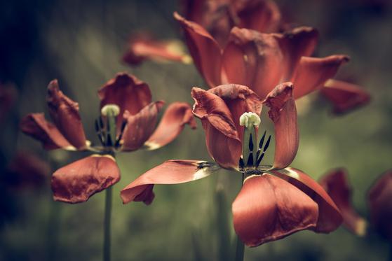 피어난 꽃은 시들기 마련이다. 세상에 시들지 않는 꽃은 없다. 우리의 욕망과 꽃과 같다.