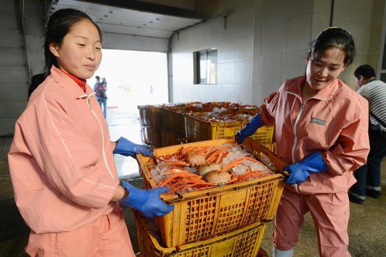 北, 나선경제특구 수산물 가공업체 [연합뉴스]