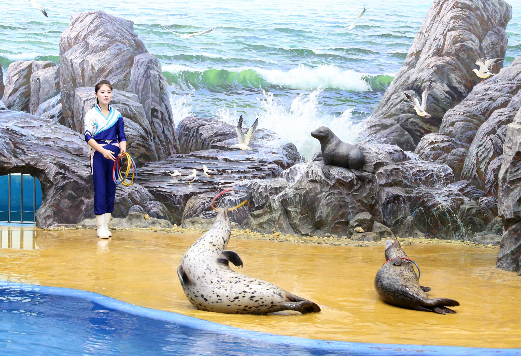 지난 6일 평양 중앙동물원에서 물범들이 조련사의 지시에 따라 쇼를 하고 있다. 평양사진공동취재단