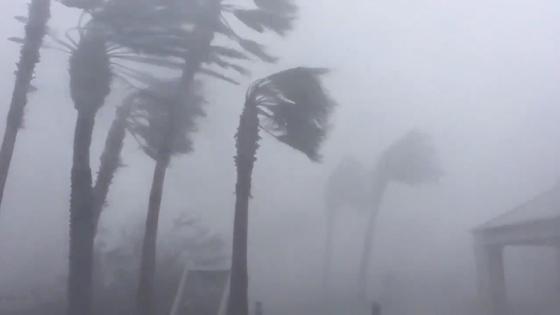 플로리다주 파나마시티에 상륙한 허리케인 마이클이 야자수 나무를 뽑을듯 강풍을 내뿜고 있다. [로이터=연합뉴스]