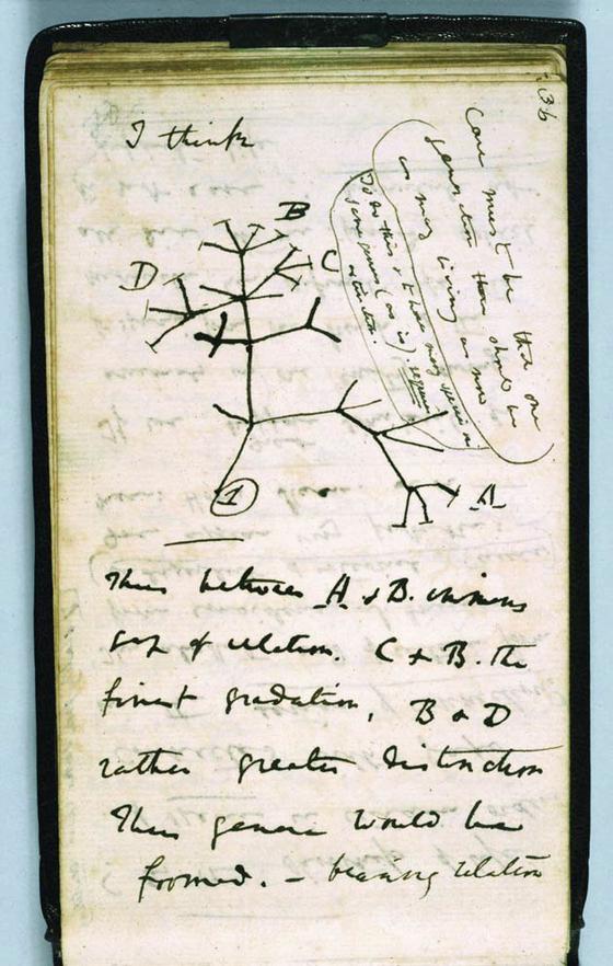 영국의 생물학자 찰스 다윈이 1837년 그린 생명의 나무. 다윈은 자신의 저서 '종의 기원'을 통해 루카의 존재를 추정했다. [중앙포토]