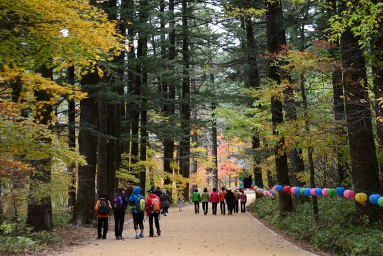 월정사 일주문을 지나면 펼쳐지는 전나무숲길. [사진 김영록]