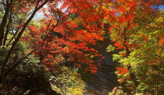 봉정암 가는 길. 빛 고운 단풍이 잎마다 살뜰히 내려앉았다. [사진 하만윤]