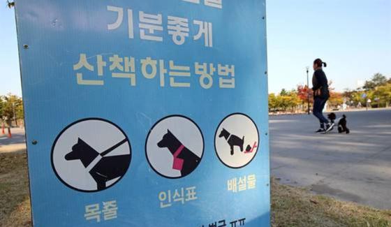 목줄 풀린 개를 피하려다 행인이 넘어져 다친 데 대해 법원이 견주에 벌금형을 선고했다. 사진과 기사 내용은 관련이 없습니다. [연합뉴스]
