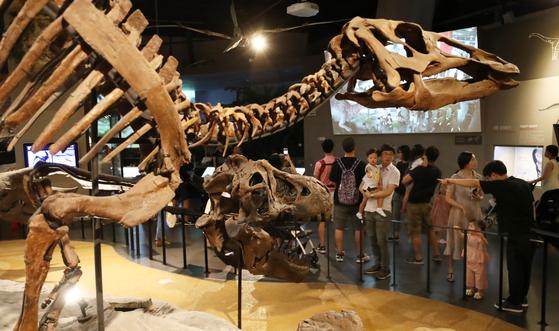 2억7000만년 전 페름기에 처음 나타난 은행나무는 중생대 쥐라기와 백악기에 전성기를 이루었는데, 당시 공룡은 은행을 먹고 씨앗을 퍼뜨려주는 역할을 했다. 오늘날 은행나무가 단 한 종 밖에 남지 않은 원인 중 하나로 공룡의 멸종이 거론되고 있는 이유다. 사진은 지난 8월19일 경기도 과천시 국립과천과학관 자연사관을 찾은 가족 단위 관람객들이 공룡 화석 등 전시물을 살펴보는 모습. [사진 뉴스1]