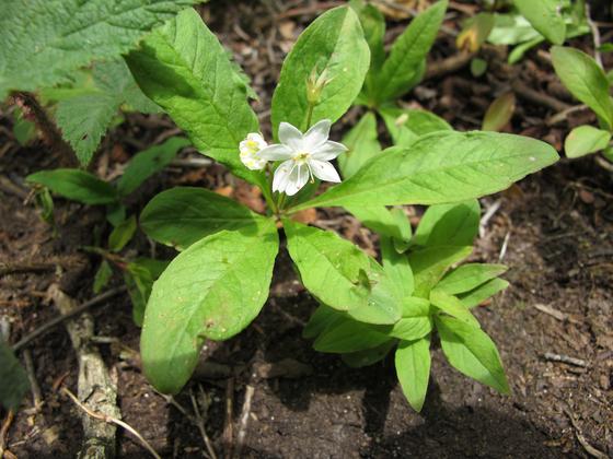 기생꽃은 생물다양성 부족과 지구온난화로 위험에 처했다. [국립생물자원관]