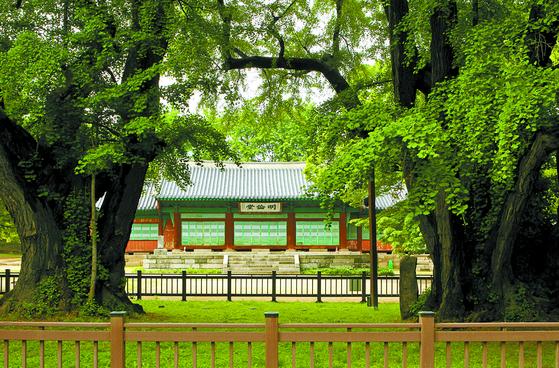 2010년 촬영된 성균관의 은행나무. 수령은 600년 정도로 추정하고 있다. [중앙포토]