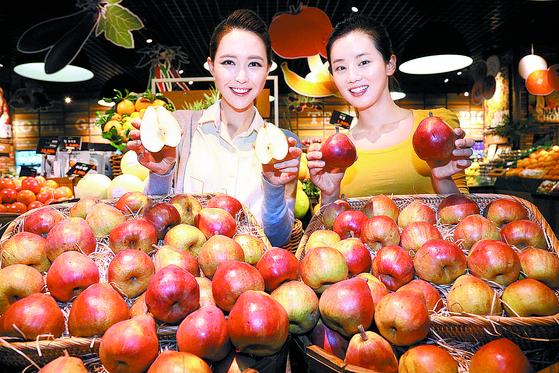 [사진] 사과 아닙니다
