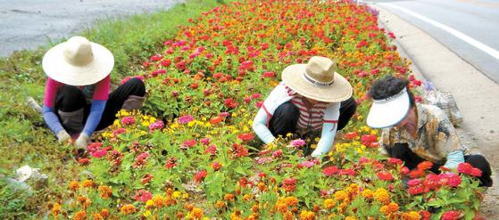 오대산 자락 깊숙한 곳에 위치한 열목어마을은 주민의 꾸준한 환경정화 활동과 꽃 심기 등 활동을 통해 마을 환경을 깨끗하고 아름답게 조성·유지하고 있다. [사진 농림축산식품부]
