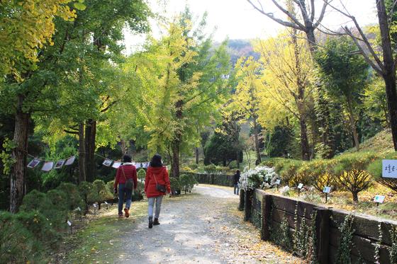 단풍낙엽 산책길.