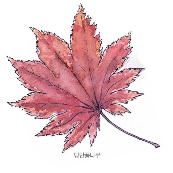 [소년중앙] 황경택 쌤과 자연이랑 놀자 8.단풍잎