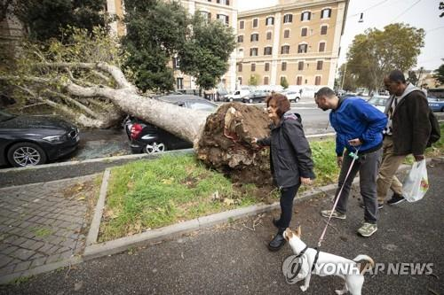 29일 로마 도심에서 강풍에 쓰러진 나무가 주차된 차량을 덮친 모습 [EPA=연합뉴스]