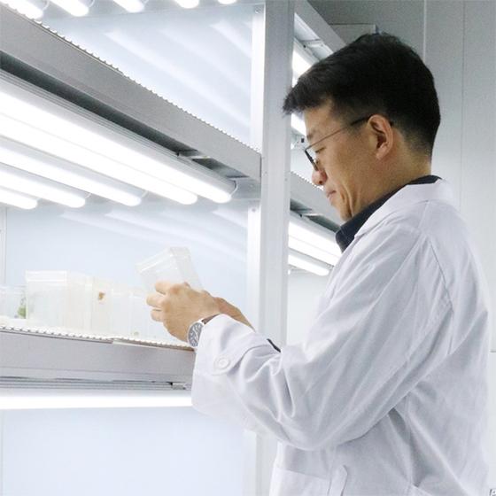 권순일 툴젠 종자연구소 팀장이 1일 식물 배양실에서 실험용 감자를 살펴보고 있다. [사진 툴젠]