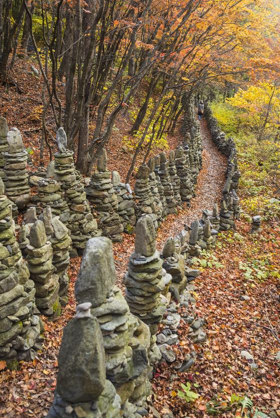 노추산 자락의 모정탑길은 올림픽 아리바우길이 찾아낸 비경 중의 비경이다. 권혁재 사진전문기자
