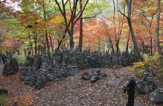 모정탑길. 노추산 깊은 숲 곳곳에 돌탑 무더기가 서 있다. 여자 혼자의 힘으로 이 많은 돌탑을 쌓았다는 것이 믿어지지 않는다. 손민호 기자