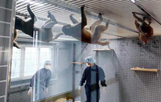 인류 난치병 치료 위한 원숭이 사육 … 국내 최대 3000마리 '베이스캠프'