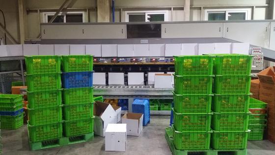 지난 10일 오후 북한으로 보내질 제주 감귤을 포장할 하얀색 감귤 박스가 서귀포시 중문농협 APC 센터 선과장에 쌓여있다. [사진 중문농협 APC센터]
